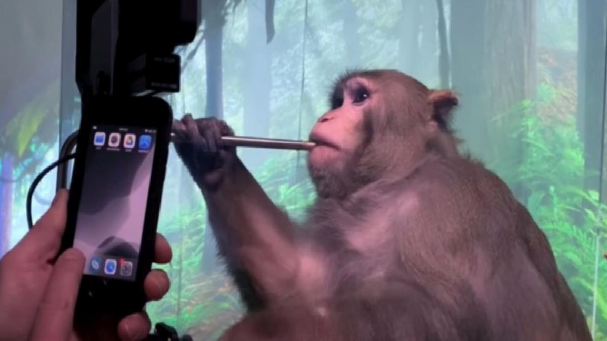 Neuralink bağlanan maymun düşünce gücüyle oyun oynadı
