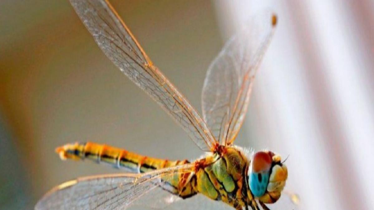 Yusufçuk, gelecekteki drone tasarımlarına ilham veriyor