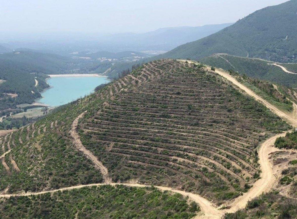 Adana da 208 futbol sahası büyüklüğündeki alan, 5 ayda yeşillendirildi #4
