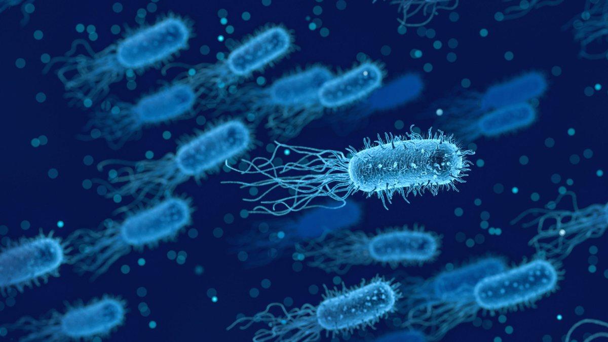 Bağırsak florasını koruyan 6 probiyotik gıda