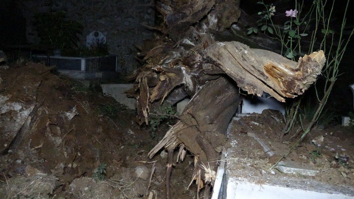 Bursa'da tarihi çınar ağacı, şehitliğe devrildi