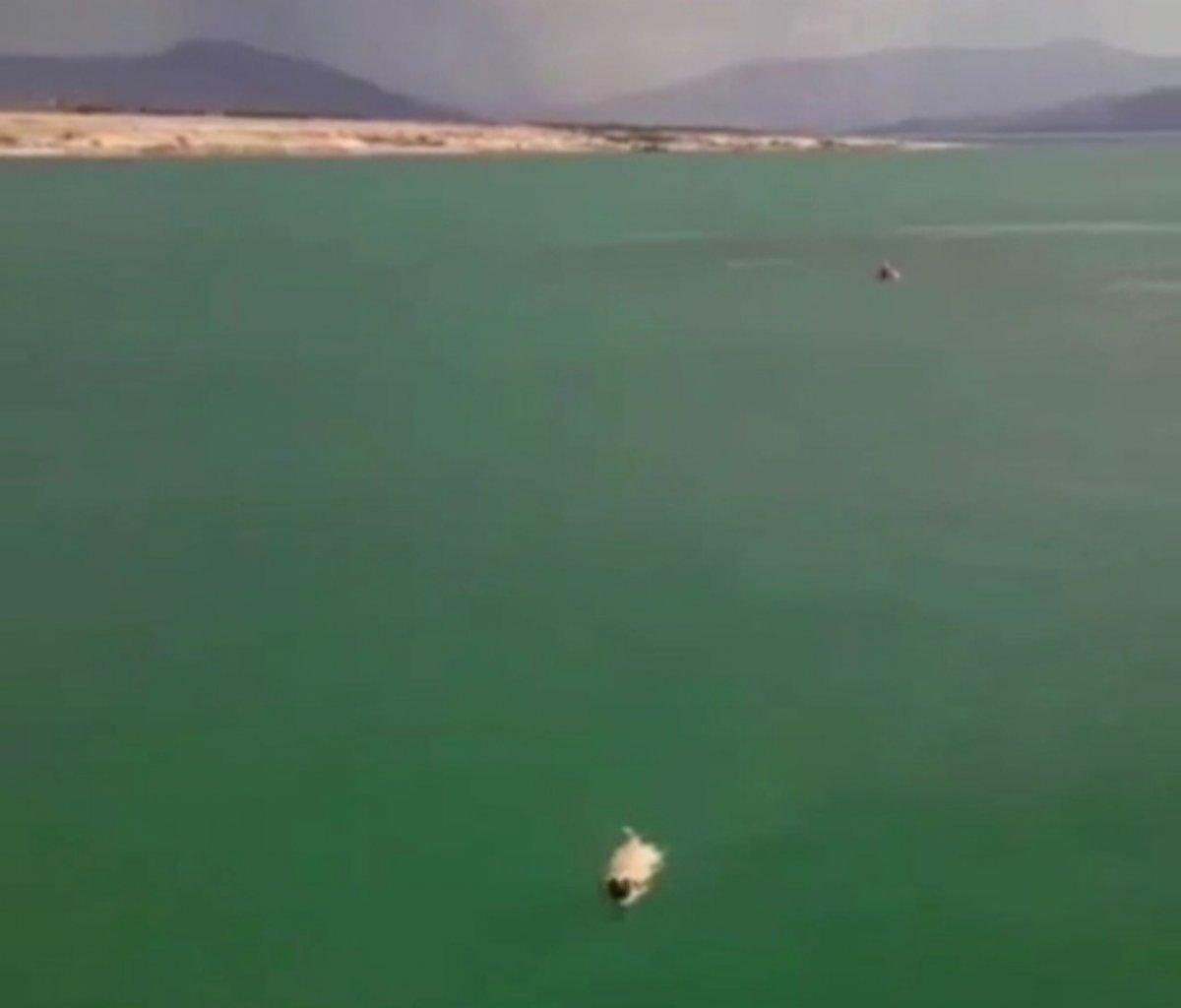 Elazığ'da köpeği kurtarmak için girdiği gölde mahsur kaldı #1