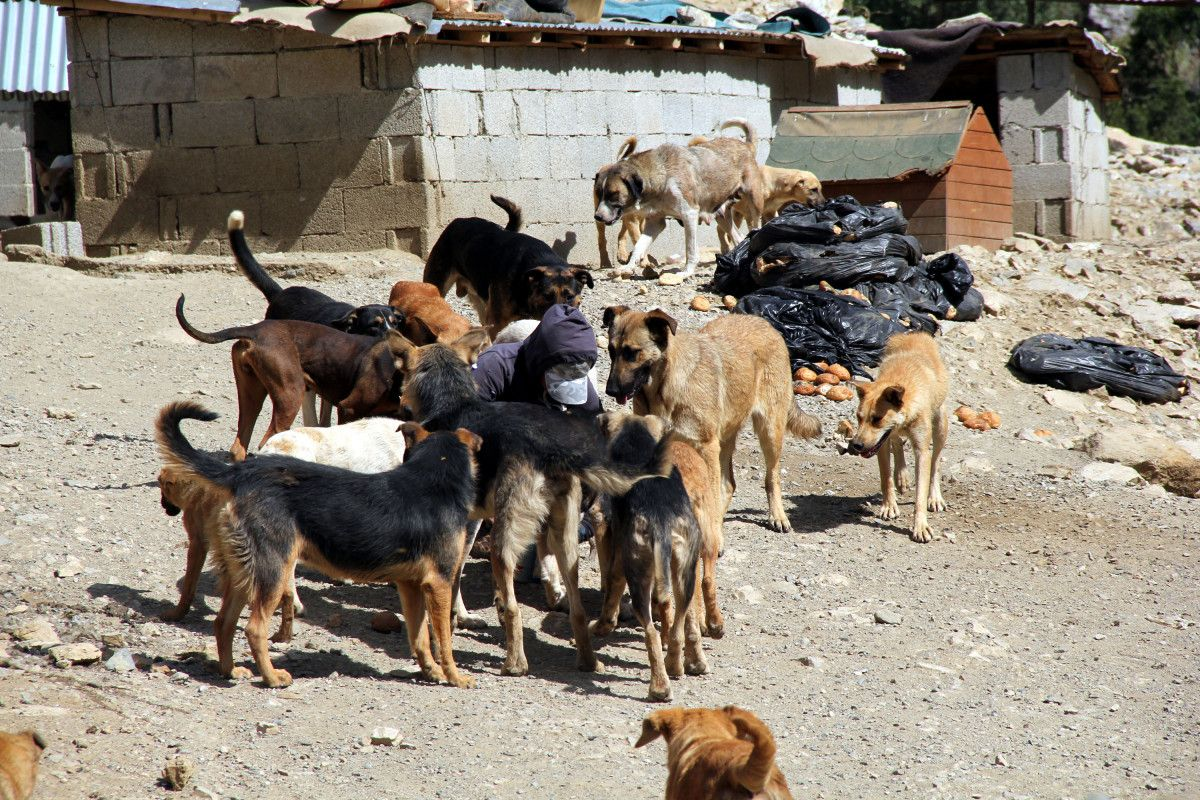 Hakkari deki öğretmen, köpekleri için tayinden vazgeçti #2