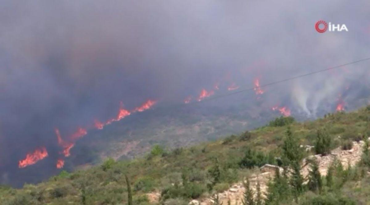 İzmir'deki orman yangını, 14 saat sonra kontrol altına alındı #1