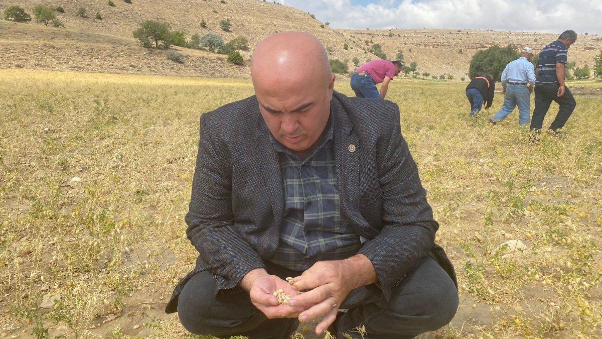 Karaman'da dolu yağışı nohut ekili alanlara zarar verdi