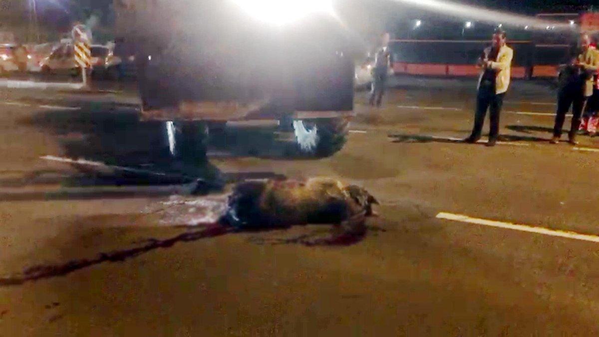 Kars'ta otomobilin çarptığı boz ayı öldü