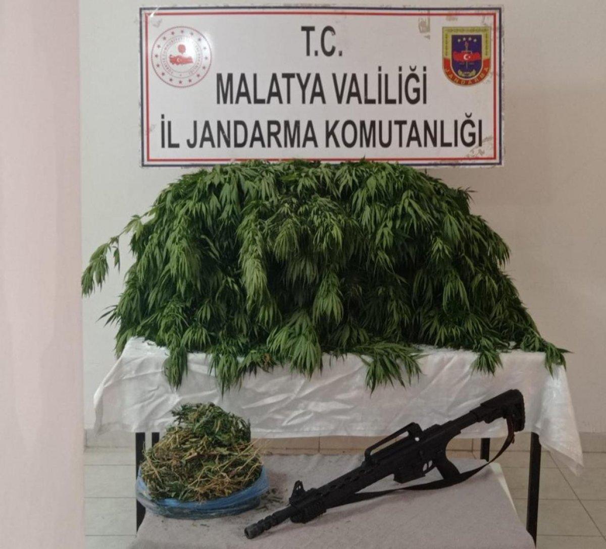 Malatya'da 2 bin 392 kök Hint keneviri ele geçirildi #2