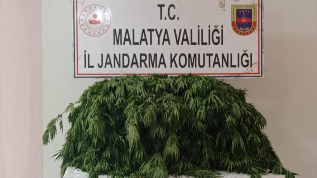 Malatya'da 2 bin 392 kök Hint keneviri ele geçirildi