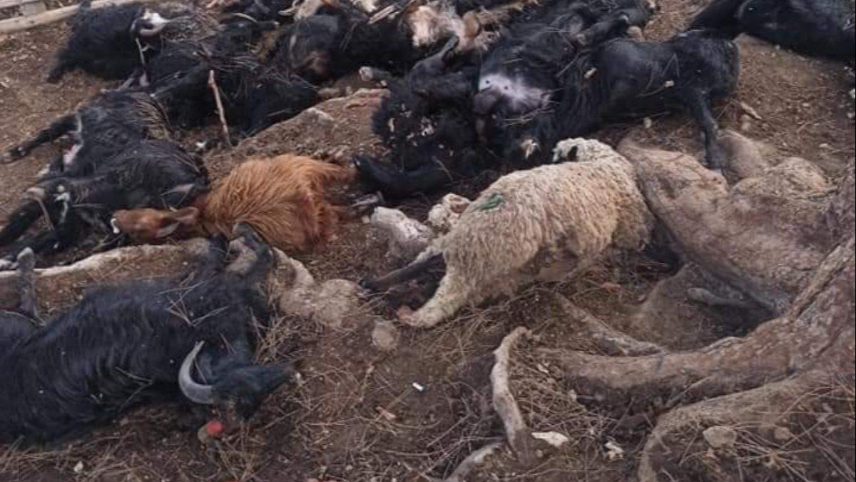 Mersin'de ağaca yıldırım düştü, hayvanlar telef oldu