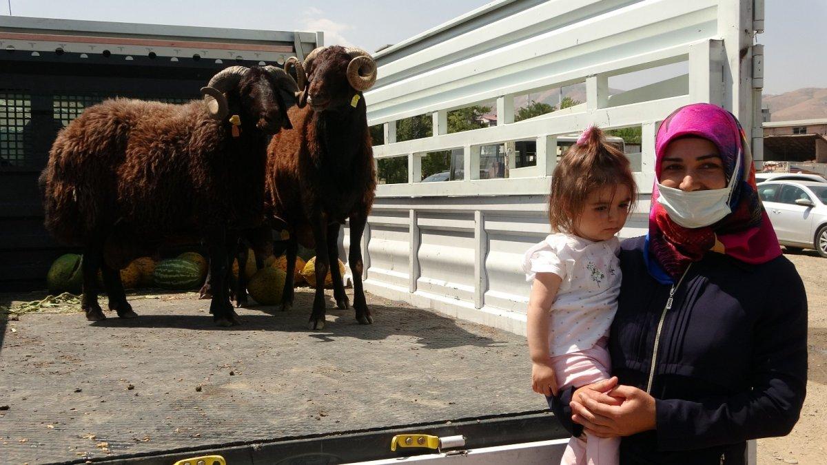 Muş'ta çiftçilere yarısı devlet destekli koç dağıtımı yapıldı #3