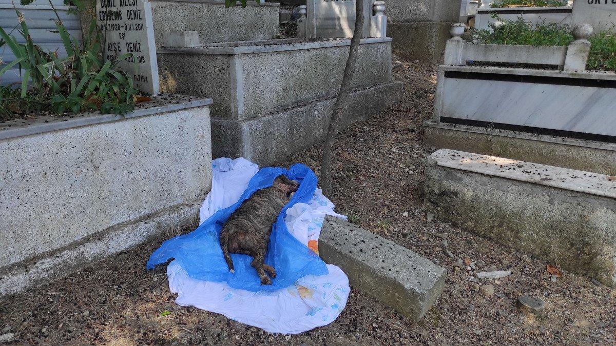 Şişli'de panik: İnsan cesedi zannedildi, köpek ölüsü çıktı