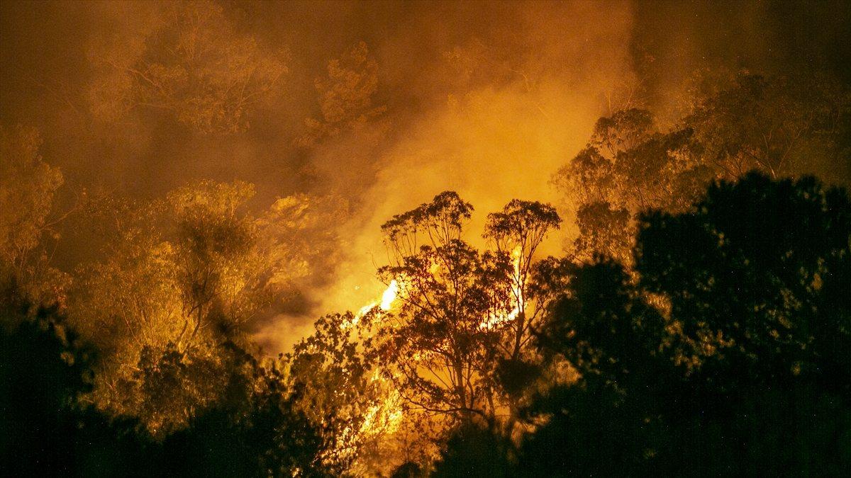 Tunus'ta orman yangını